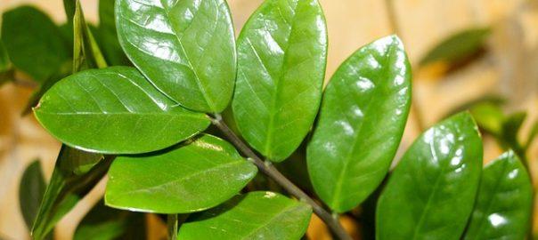 Luftbefeuchter Zimmerpflanze